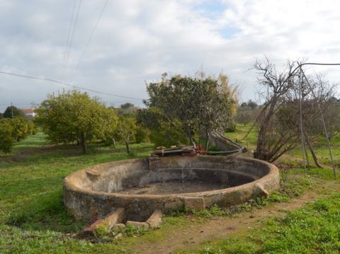 This plot enjoys an excellent location, as it is close to Tavira, Fuseta and Olhão. With an approved project for a new house, it is the ideal investment for those looking to establish themselves in the countryside, without sacrificing the busiest lif...