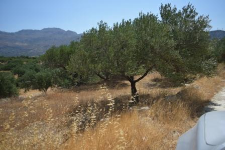 Pachia Ammos Olive grove of 2000m2 in Pachia Ammo. The water and electricity are nearby and it enjoys views to the mountains. Lastly, the property has street parking.